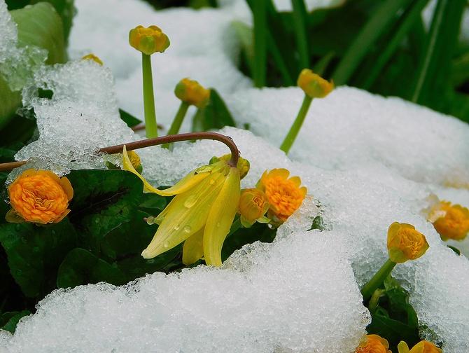 moja wiosna