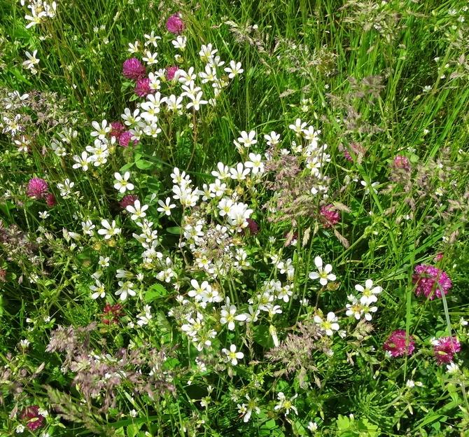 Naturalne kompozycje kwiatowe