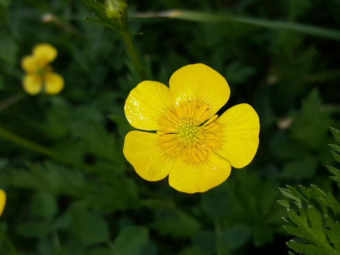 żółte słoneczko...