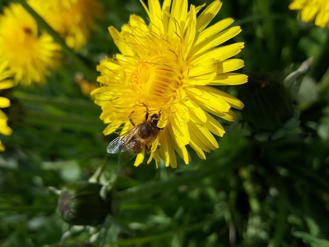 Pracowita pszczółka....