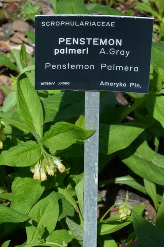 Tabliczka z nazwą rośliny