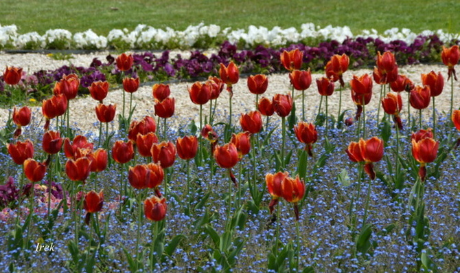 tulipany w parku w moim mieście