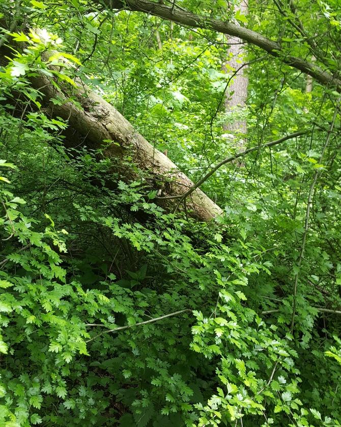 W leśnym gąszczu....