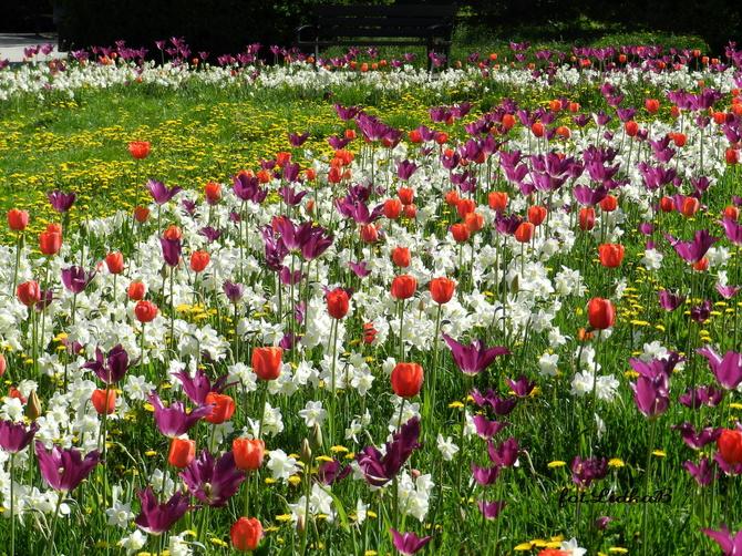 Wiosenna  łąka kwietna