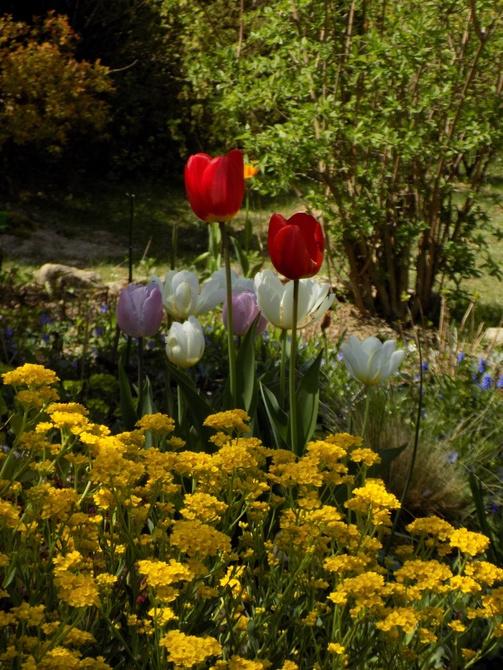 Wiosna czaruje :)