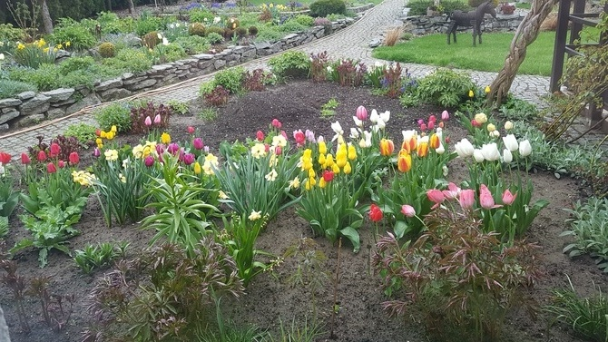 Witam wiosennie z mojego ogrodu