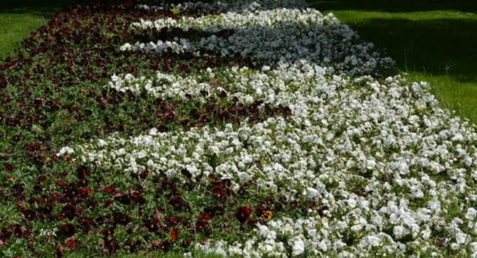 Wzorzysty dywan kwiatowy