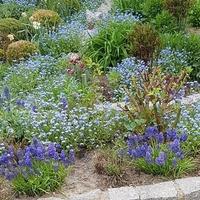 Błękity królują w ogrodzie