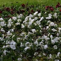 Dywanik kwiatkowy w parku