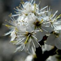Kosmate kwiatki;)