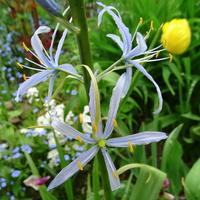Kwiatki jak delikatne gwiazdki