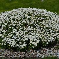 Kwiaty przed Grobem Nieznanego Żołnierza