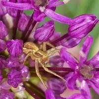Mieszkanko pająka...