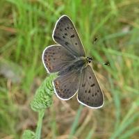 Motyli w tym roku niewiele