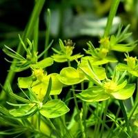 Żółto i zielono:)