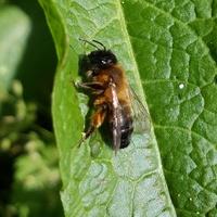 Pszczółka w mieście...