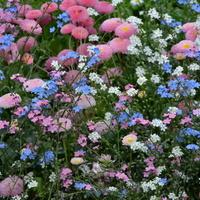 Te kwiaty znajdowały się na obrzeżu fontanny