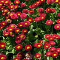 To też są kwiaty przed Grobem Nieznanego Żołnierza