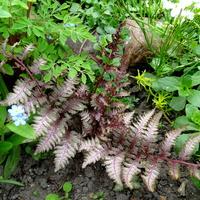 Trochę kolorowych liści