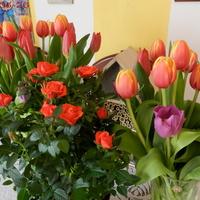 Tulipany i róże