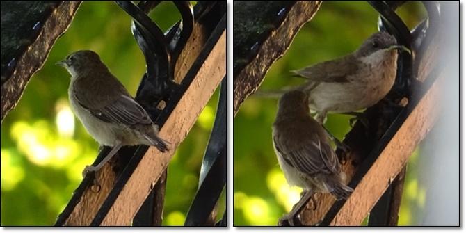 Co to za ptaszyny ?