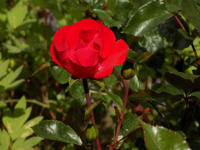 Córki Hanabi zaczynają kwitnienie :)