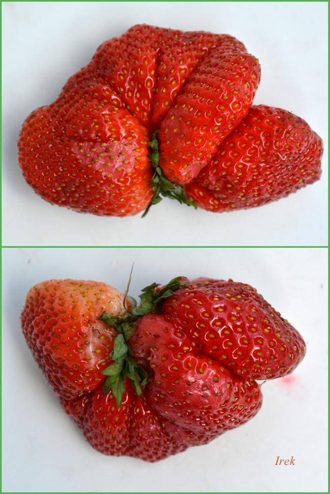 Dziwne truskawki