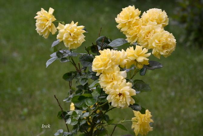 Kwiaty na osiedlu