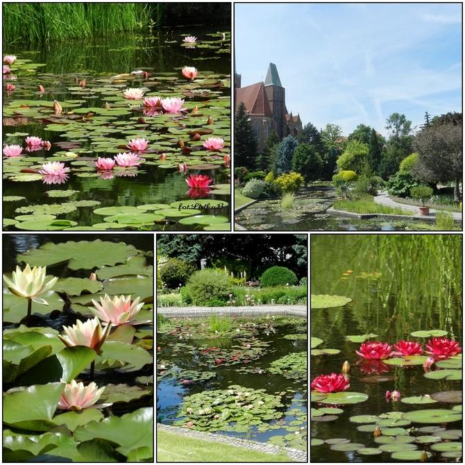 Lato-Ogród Botaniczny we Wrocławiu