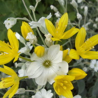 Biało żółty bukiecik.