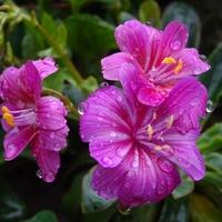 Deszczowa sobota i niedziela...