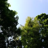 Drzewa....