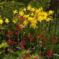 Góra kwiatów i zapachu :)