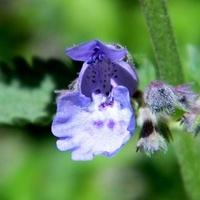 Kocie kwiatuszki;-)