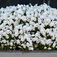 kopuła z kwiatów