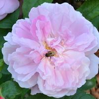 Kwiat z robakiem