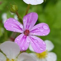 Kwiatek....