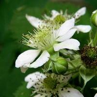 Kwiatki białe,
