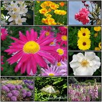 Kwiaty ,czerwiec 2021