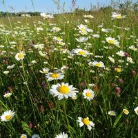 Kwiaty, jak okiem siegnąć :)