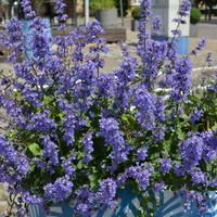 Kwiaty ustawione na chodniku w Gdańsku