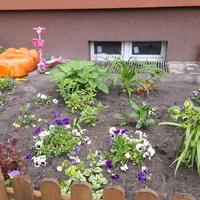 Ogródek przyblokowy...