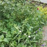 Ogródek przyblokowy
