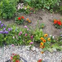 Ogródek przyblokowy.....