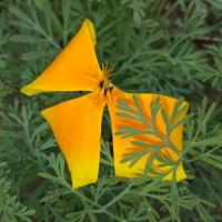 Pierwszy kwiat...