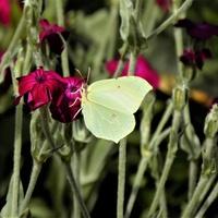 Polowanie na motyle :)