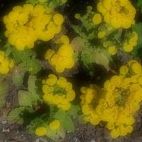 Rośliny o żółtej barwie