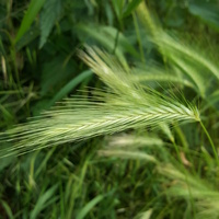 Trawy.....