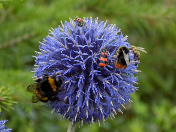 Jeszcze więcej owadów :)