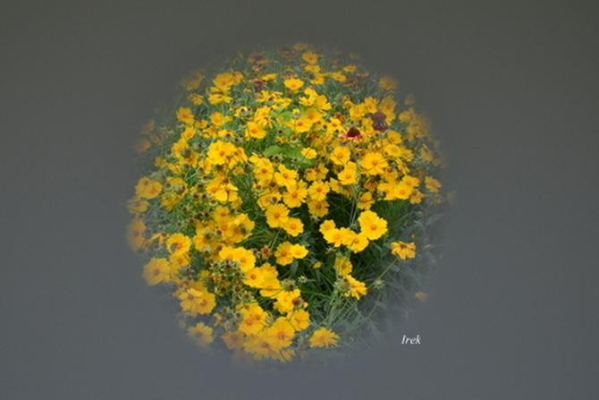 Kwiaty na kuli ziemskiej